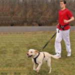 What Kind of Harness or Leash Should You Buy?